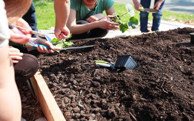 Ten Tips for Living a Fruitful Life From A Backyard Gardner